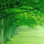 Il Colore Verde