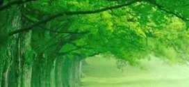 Il Colore Verde 13-06-18