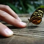 I Valori della Fragilità